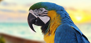 Bluw And Yellow Macaw Fierce