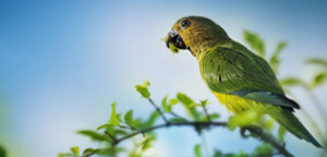 Brown Parakeet On Sitting Tree