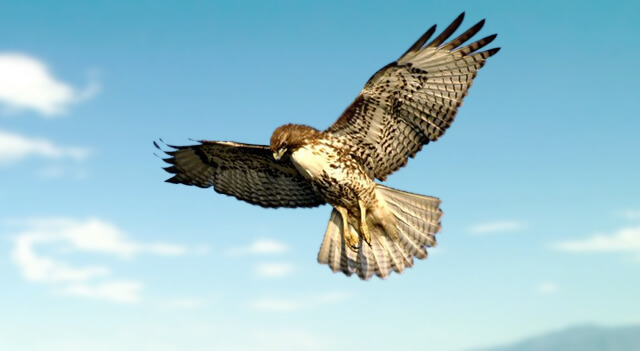 the different types of eagles and their habitat What is a habitat a habitat, or biome, is the type of environment in which plant and animals live habitat is dictated by what kinds of plants grow there, the.