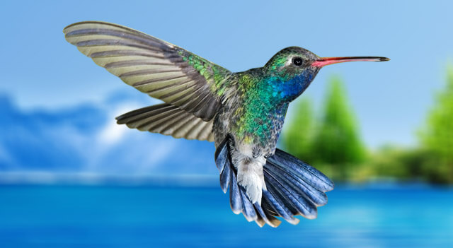Colorful hummingbirds flying - photo#19