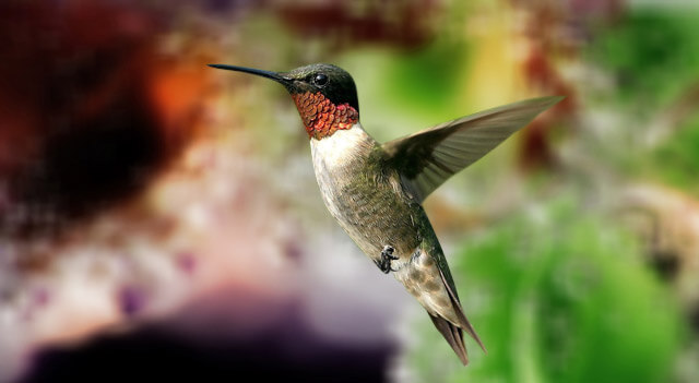 Hummingbird Picture