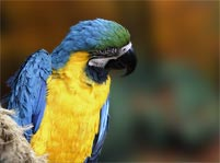 Parrot Facts And Pictures