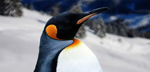Penguin Beak View