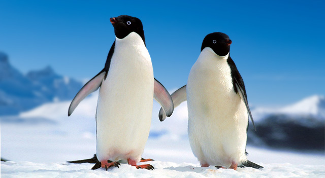 Penguin Together