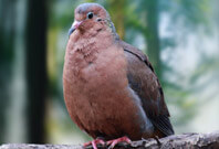 Socorro Dove Picture