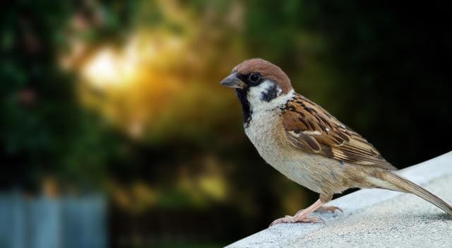 Sparrow Are Gazzing