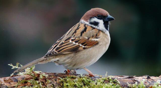 What Do Birds of Prey Eat?