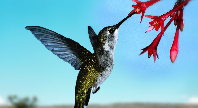 Recipe For Food For Hummingbirds