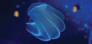 Comb Jelly Facts