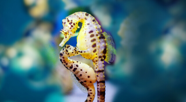 Seahorse Picture
