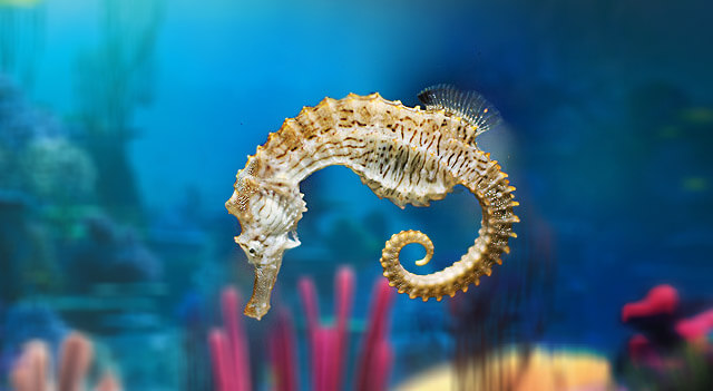What Do Seahorses Eat?