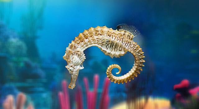 What Do Seahorses Eat?