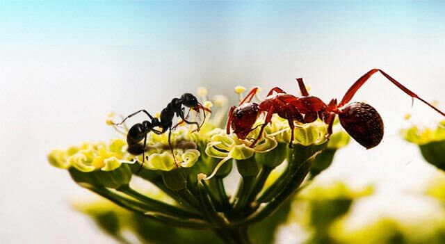 Ant Sitting On Flower