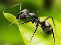 Ants Facts And Pictures