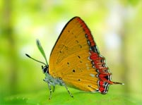 Butterfly Facts And Pictures