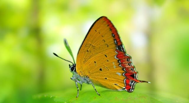 Colorful Butterfly Picture