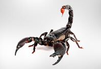 Scorpion Full View