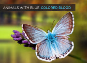 Animals with Blue-colored Blood
