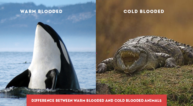 Difference Between Warm Blooded and Cold Blooded Animals