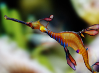 Facts about Leafy Seadragon