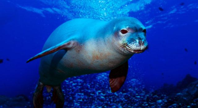 Marine creatures Endangered marine species Rare marine species ...