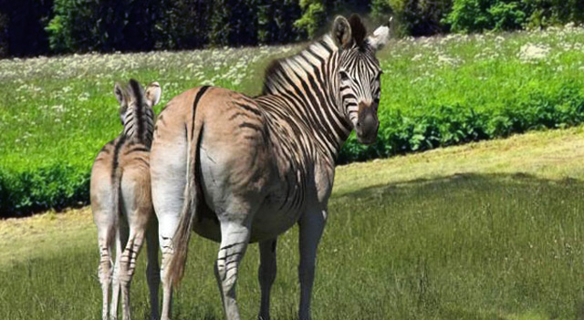 extinct animals species list of facts and pictures