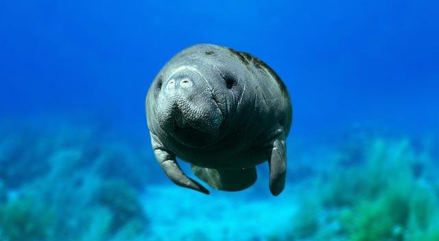 Caribbean Sea Animal Life: List Of Endangered Species Of Marine Animals