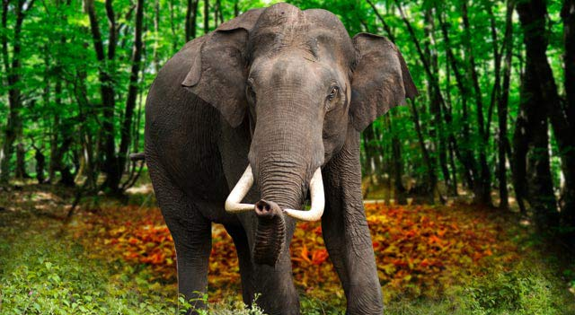 Elephants Are Also Known As One Of The Most Intelligent Animals Living In World Their Intelligence Level Is Close To Whales How Many Types