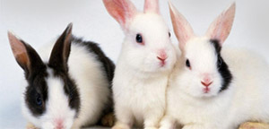Beautiful Rabbits Picture