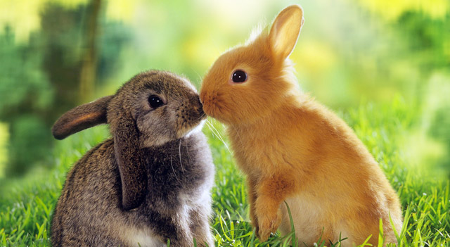 Cute Rabbits Picture