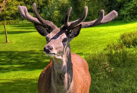 Deer Antlers View Picture In Garden