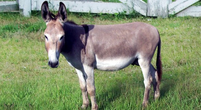 Donkey Are Gazzing
