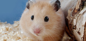 Hamster Are Gazzing