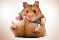 Hamster Sitting View Picture
