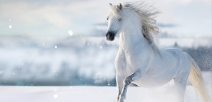 Horse White Color View
