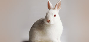 Rabbit Are Fierce View Picture