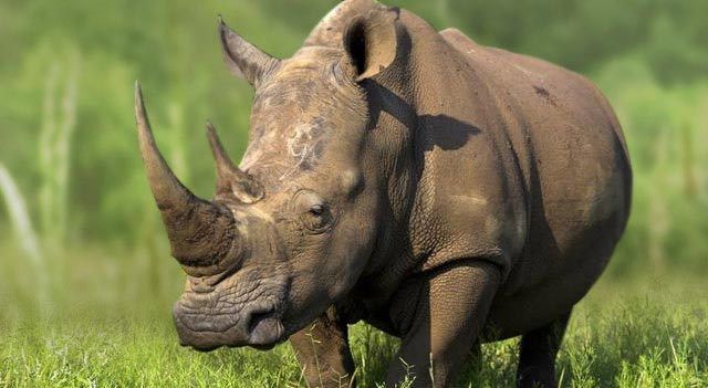 [Image: rhinoceros-picture.jpg]