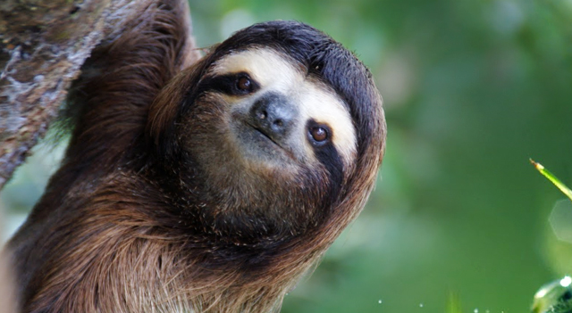 Sloth Animal Picture
