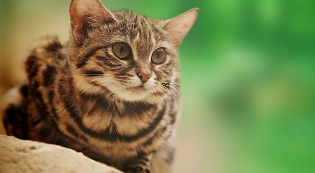 Smallest Cat Of The World: Smallest - 24.5KB