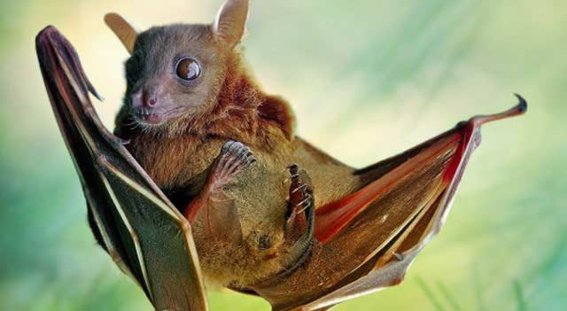 what are bats