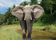 What Are Elephants? Elephant Pictures