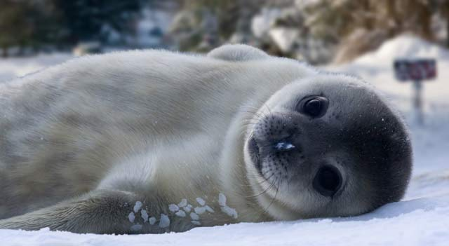 White Color Of Seals