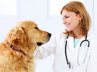 Useful Tips on How to Take Care Your Pet
