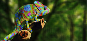 Chameleon Sitting On Tree Branch