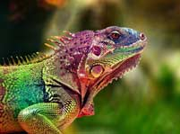 Lizard Facts And Pictures