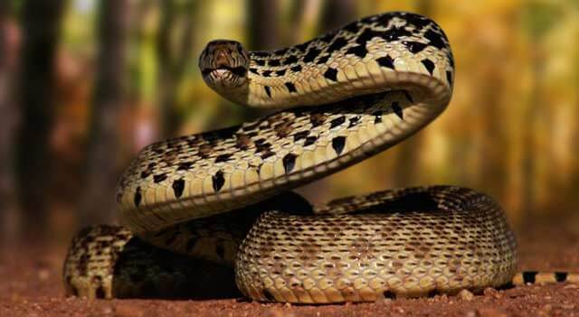 Snake Facts, Pictures, Habitat And Food