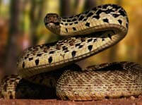 Snake Facts And Pictures